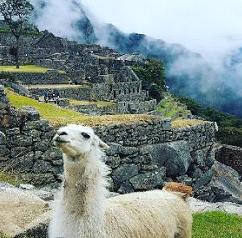 Llama-machu Pichu-Alex